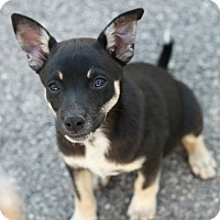 Adopt A Pet :: Bella - CHESTERFIELD, MI
