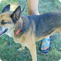 Adopt A Pet :: Daisy - Greeneville, TN