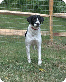 Hound (Unknown Type) Mix Dog for adoption in Pottstown, Pennsylvania - Daisy