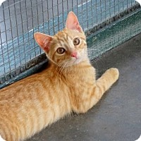 Adopt A Pet :: Rocket - Lathrop, CA