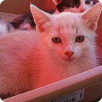 Adopt A Pet :: Yipee - Woodland, CA