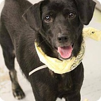 Adopt A Pet :: Ben - Paterson, NJ