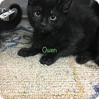 Adopt A Pet :: Owen - Chicago Heights, IL