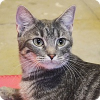 Adopt A Pet :: Ella - Lincoln, NE