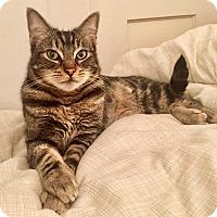 Adopt A Pet :: Cesar - Novato, CA