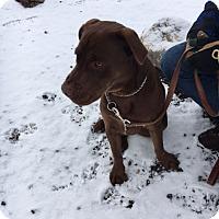 Adopt A Pet :: Mocha - Cedaredge, CO