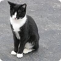 Adopt A Pet :: BooBoo - Maxwelton, WV