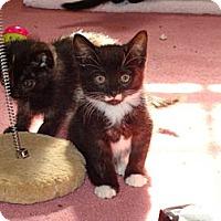 Adopt A Pet :: Holly - Spotsylvania, VA