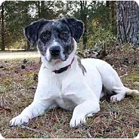 Adopt A Pet :: Gracie-See my video! - Mocksville, NC