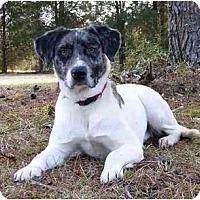 Adopt A Pet :: Gracie-See my video! - Mocksville, NC