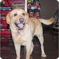 Adopt A Pet :: JACOB - La Mesa, CA