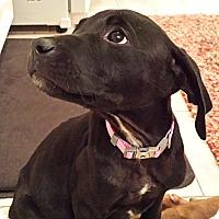 Adopt A Pet :: June Bug - Houston, TX