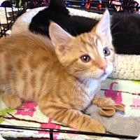 Adopt A Pet :: Pete - San Ramon, CA