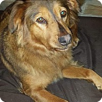 Adopt A Pet :: Ginger - Virginia Beach, VA