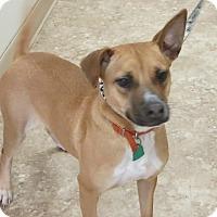 Adopt A Pet :: Ariel - Clear Lake, IA