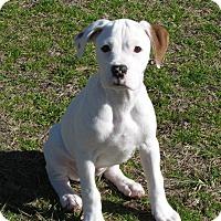 Adopt A Pet :: Nova - Arden, NC