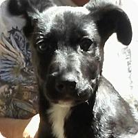 Adopt A Pet :: Phil - Orlando, FL