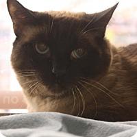 Adopt A Pet :: Saya - Phoenix, AZ