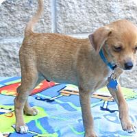 Adopt A Pet :: Cardiff - Woonsocket, RI