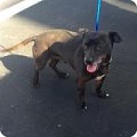 Adopt A Pet :: Cutie - Las Vegas, NV