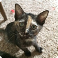 Adopt A Pet :: Cameron - Levelland, TX