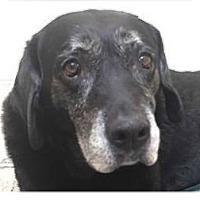 Adopt A Pet :: Alana - Springdale, AR
