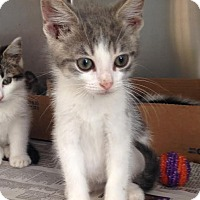 Adopt A Pet :: Logan - East Brunswick, NJ