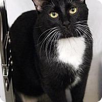 Adopt A Pet :: Pico - Dallas, TX