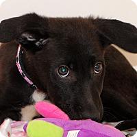 Adopt A Pet :: Addie~meet me~ - Glastonbury, CT