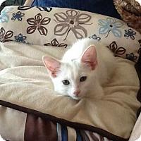 Adopt A Pet :: Sophia - Glendale, AZ