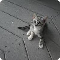 Adopt A Pet :: Annie - Kinston, NC