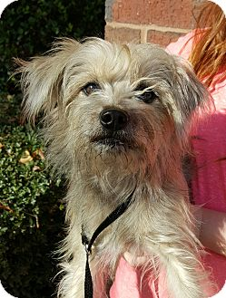 Terrier (Unknown Type, Medium) Mix Dog for adoption in Summerville, South Carolina - Widget