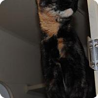 Adopt A Pet :: Chop Suey - Ridgeland, SC