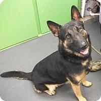 Adopt A Pet :: Bo Jingle - Picayune, MS