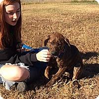 Adopt A Pet :: Esse - Foster, RI