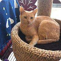 Adopt A Pet :: Margo - Fairfax, VA