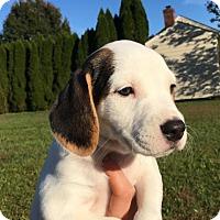 Adopt A Pet :: Delta - Richmond, VA