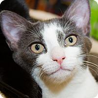 Adopt A Pet :: Beth - Irvine, CA