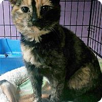Adopt A Pet :: Gricella - Joplin, MO