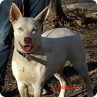 Adopt A Pet :: Diamond(60 lb) New Pics/Video - West Sand Lake, NY