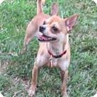 Adopt A Pet :: Chino