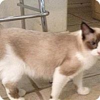 Adopt A Pet :: Castor - Del Rio, TX