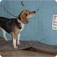 Adopt A Pet :: Ben/Pending - Zanesville, OH