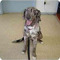 Adopt A Pet :: Loni - Mesa, AZ