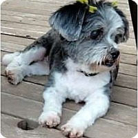 Adopt A Pet :: Mollie - Evans, CO