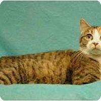 Adopt A Pet :: Rosemary - Sacramento, CA