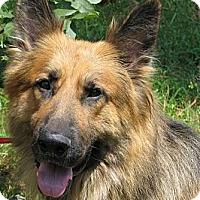 Adopt A Pet :: Hanson - Hernando, MS