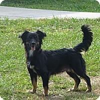 Adopt A Pet :: Lady - Oviedo, FL