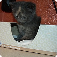 Adopt A Pet :: Ruby - Acme, PA