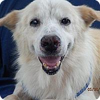 Adopt A Pet :: Joe - Knoxville, TN